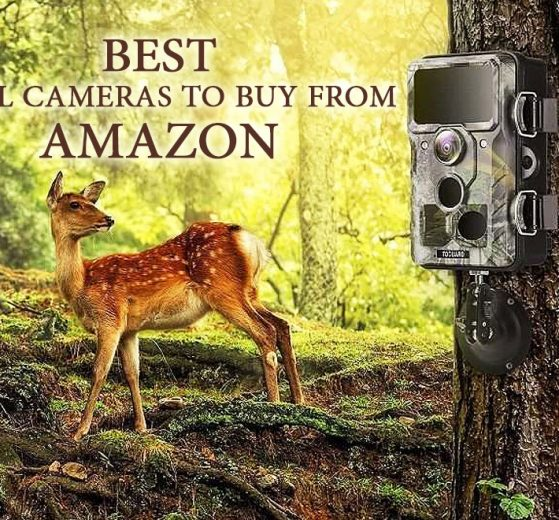 Top 10 Best Trail Cameras to Buy From Amazon